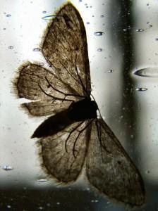 Moth of Bravery